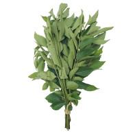 Curry Leaf 1bundle