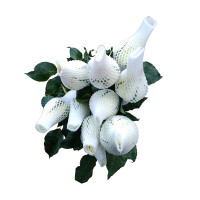 White Rose 10pcs