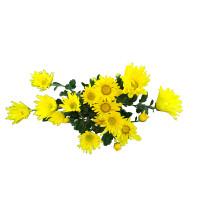 Juu Chrysanthemum 1bundle