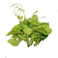 Gwetauk Leaf 1bundle